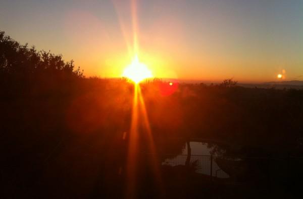 Rosanna Sunrise