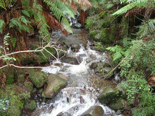 Sherbrooke Forest Waterfall