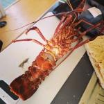 #crayfish #rottnest